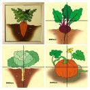 Овощи картинки разрезные Д601