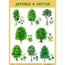Плакат Деревья и листья