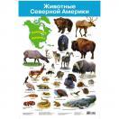 Плакат. Животные Северной Америки  2881