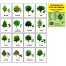 Раздаточные карточки. Деревья и кустарники